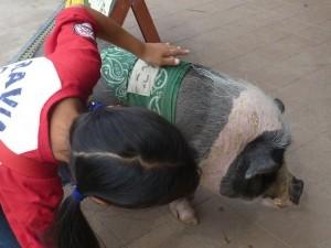 モクモクファームの豚・放し飼いです